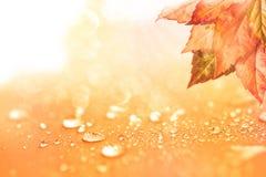 与叶子和雨水的秋天背景下降 免版税库存照片