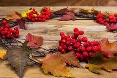 与叶子和rrowan莓果的秋天花圈在木背景 免版税图库摄影