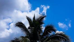 与叶子树的天空云彩 库存图片
