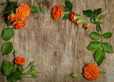 与叶子框架的玫瑰 库存照片