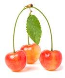 与叶子特写镜头的三棵樱桃在白色背景 免版税库存照片