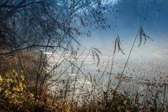与叶子特写镜头的秋天五颜六色的烟分支在被弄脏的backgr 免版税图库摄影