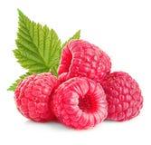 与叶子特写镜头的莓在白色背景 库存照片