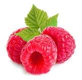 与叶子特写镜头的莓在白色背景 库存图片