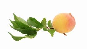 与叶子的一个桃子 免版税库存照片