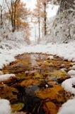 与叶子的一个池在雪,秋天公园 免版税库存照片