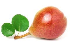 与叶子的一个红黄色梨在白色背景 免版税图库摄影