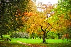 与叶子的一个结构树在背景pozhelevshey sm 免版税库存图片
