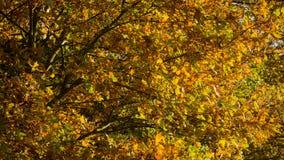 与叶子的一棵树在秋季 库存图片