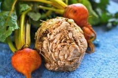 与叶子的一芹菜和两个桔子甜菜 免版税库存照片