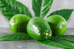 与叶子的三绿色未加工的成熟鲕梨果子在一张灰色黑暗的具体桌上 免版税库存照片