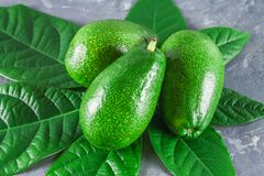与叶子的三绿色未加工的成熟鲕梨果子在一张灰色黑暗的具体桌上 库存图片