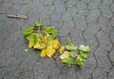 与叶子的下落的分支在秋天 库存照片