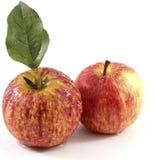 与叶子的两个美丽的湿节目苹果 库存照片