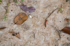 与叶子的五颜六色的热带土壤纹理 图库摄影