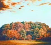 与叶子的五颜六色的秋天林木环境美化在美好的天空背景,在前景秋天倾斜领域或草坪 库存图片