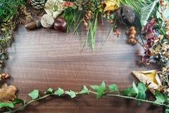 与叶子的五颜六色的秋天,杉木锥体,栗子,坚果 免版税图库摄影