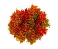与叶子的五颜六色的秋季背景 免版税库存图片