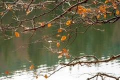 与叶子的分支在森林湖被弄脏的背景  免版税库存照片
