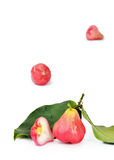 与叶子的响铃果子 库存照片
