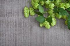 与叶子的啤酒花球果树在老木背景 顶视图 Brewin 库存照片