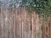 与叶子的垂直的木背景 库存照片