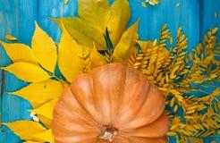 与叶子的大鲜美秋天南瓜在蓝色背景 在倾吐的餐馆沙拉的主厨概念食物新鲜的厨房油橄榄 免版税图库摄影