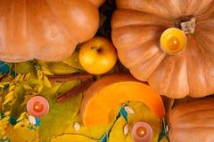 与叶子的大鲜美秋天南瓜在蓝色背景 在倾吐的餐馆沙拉的主厨概念食物新鲜的厨房油橄榄 图库摄影