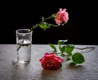 与叶子的宏观玫瑰 免版税图库摄影