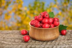 与叶子的山楂树莓果在木桌上的一个碗有模糊的庭院背景 库存照片