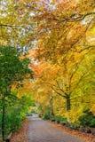 与叶子的山毛榉树在秋天颜色在沿一条被铺的路的自然森林里 免版税库存图片