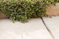 与叶子的庭院绿色青苔在一个具体遏制特写镜头 库存照片