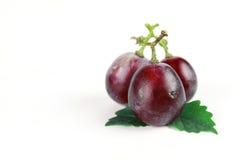 与叶子的成熟红葡萄 免版税库存照片