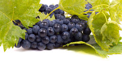 与叶子的成熟黑暗的葡萄 免版税库存照片