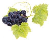 与叶子的成熟黑暗的葡萄 免版税图库摄影