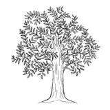 与叶子的手拉的树,自然植物标志,传染媒介 库存照片