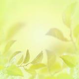 与叶子的抽象轻的春天夏天背景 免版税图库摄影