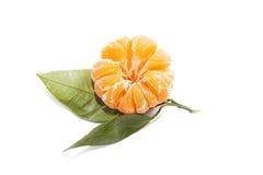 与叶子的敏感的蜜桔普通话在白色背景 免版税库存图片