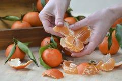 与叶子的新鲜的橘子果子或蜜桔在木背景 停滞成熟普通话,关闭的女性手 免版税图库摄影