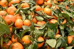 与叶子的新鲜的橘子 库存照片