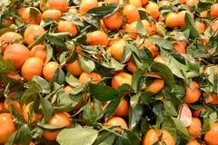 与叶子的新鲜的橘子 库存图片