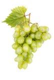 与叶子的新鲜的白葡萄 库存照片