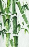 与叶子的新鲜的绿色竹词根绘与水彩 向量例证