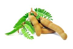 与叶子的新鲜的罗望子树在白色背景 免版税图库摄影