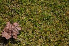 与叶子的春天草 免版税库存图片