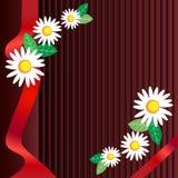 与叶子的春黄菊 免版税库存图片