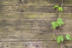 与叶子的木纹理 免版税库存照片
