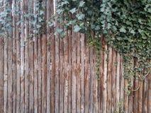 与叶子的木背景 免版税库存图片