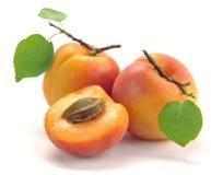 与叶子的杏子 免版税图库摄影