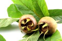 与叶子的枸杞果子 免版税库存照片